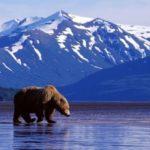 Почему Россия продала Аляску