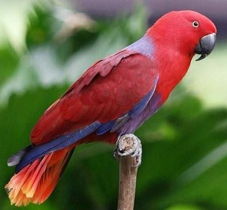 Почему попугаи умеют разговаривать