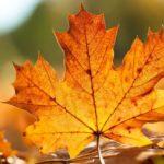 Почему листья желтеют?