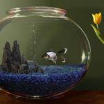Почему вода в аквариуме мутнеет?