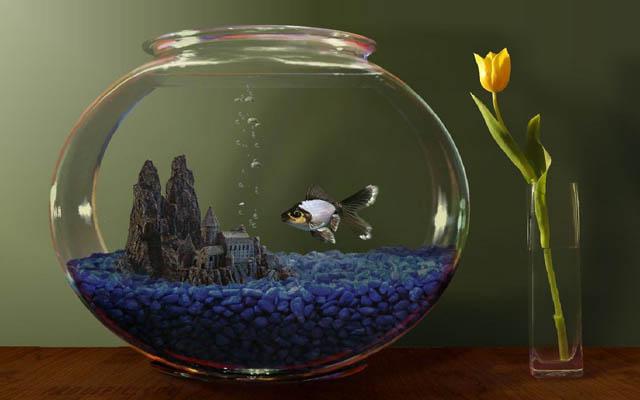 Почему вода в аквариуме мутнеет