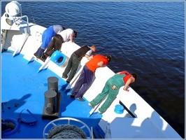 Почему возникает морская болезнь - причины и методы лечения