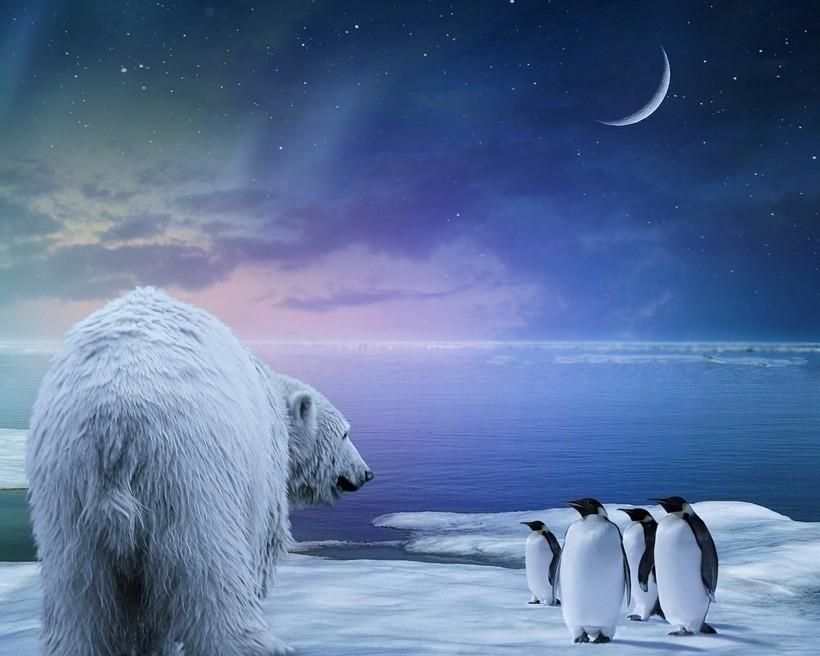 Почему белые медведи не едят пингвинов