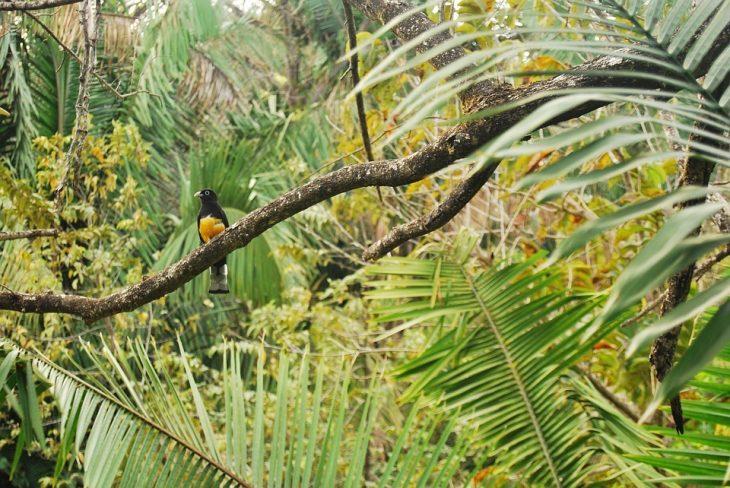 влажные дождевые экваториальные леса климат животные и растения
